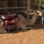 Half Day Abu Dhabi City Tour - Heritage Village